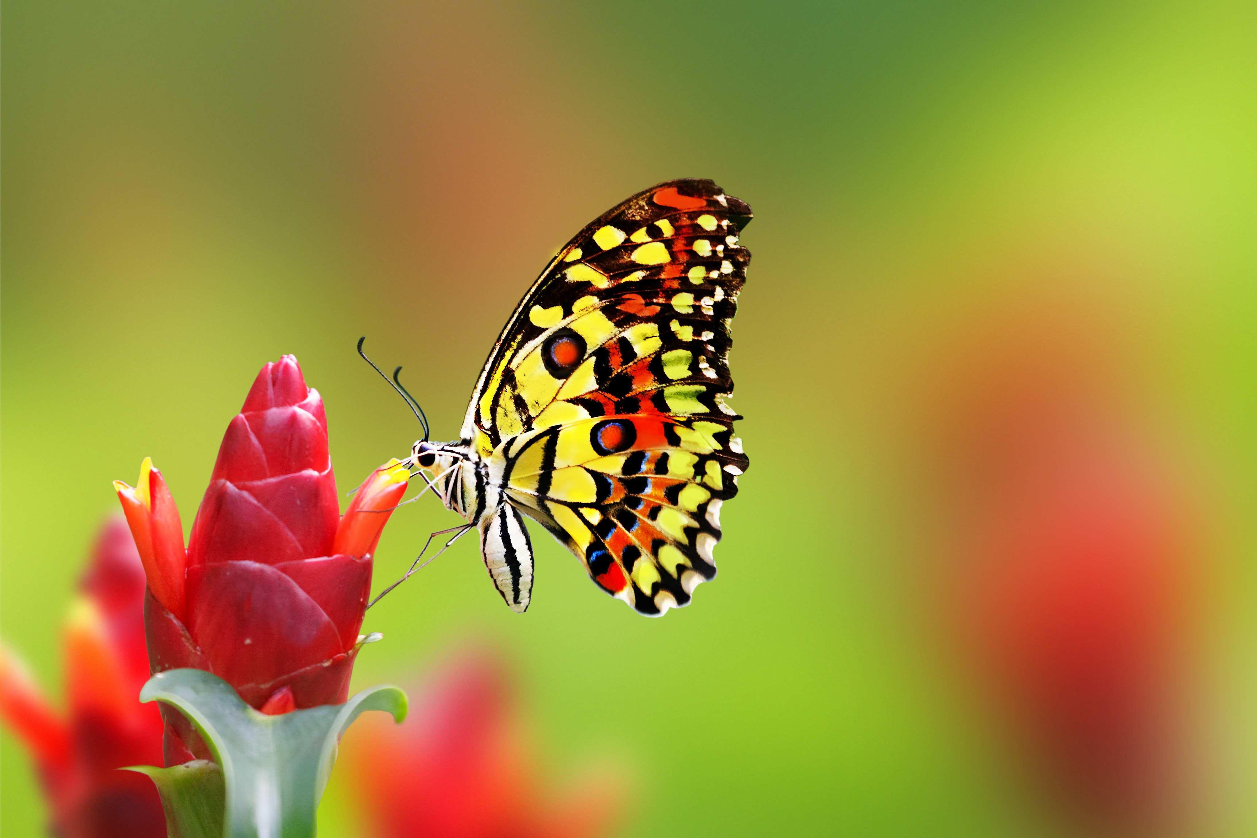 Hình nền máy tính HD con bướm đậu trên cành hoa cực đẹp