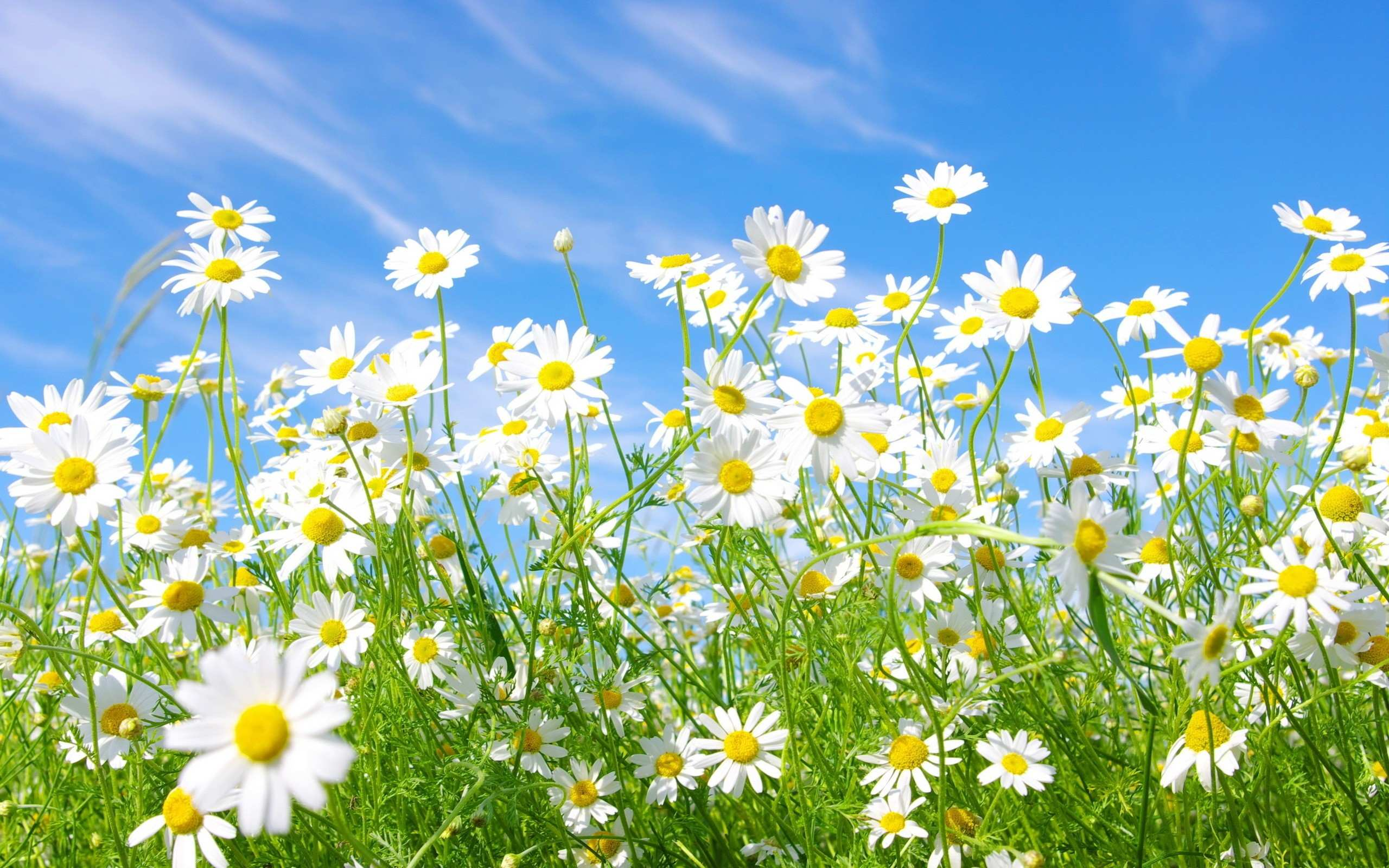 Hình nền máy tính HD những bông hoa dại đẹp