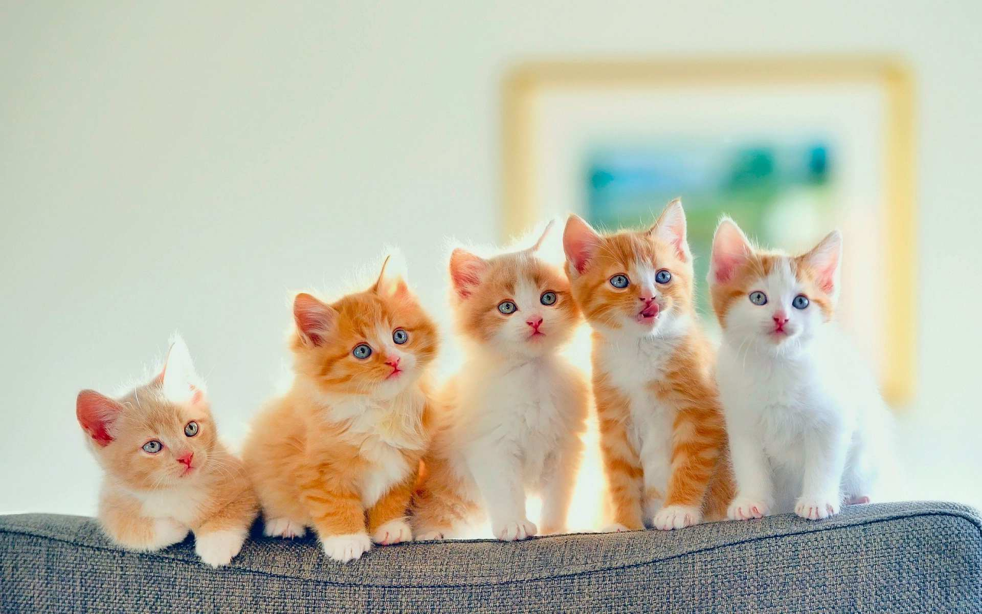 Hình nền máy tính HD những chú mèo con cực đáng yêu